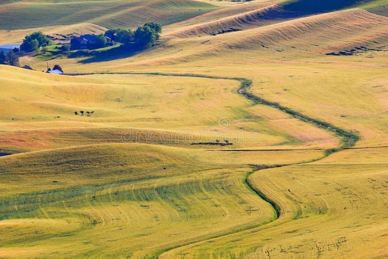 农厂草绿色palouse华盛顿麦子黄色 免版税库存图片