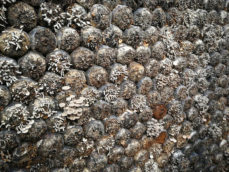 农厂蘑菇 免版税库存照片