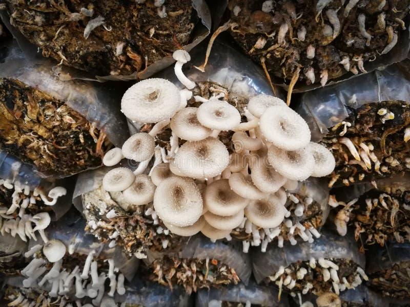 农厂蘑菇 免版税库存图片