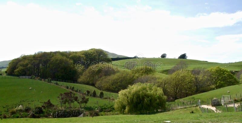 农厂风景在奥塔哥地区的一个夏日 库存图片