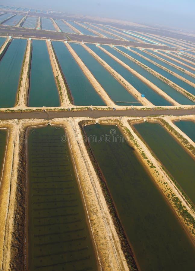 农厂鱼 库存图片