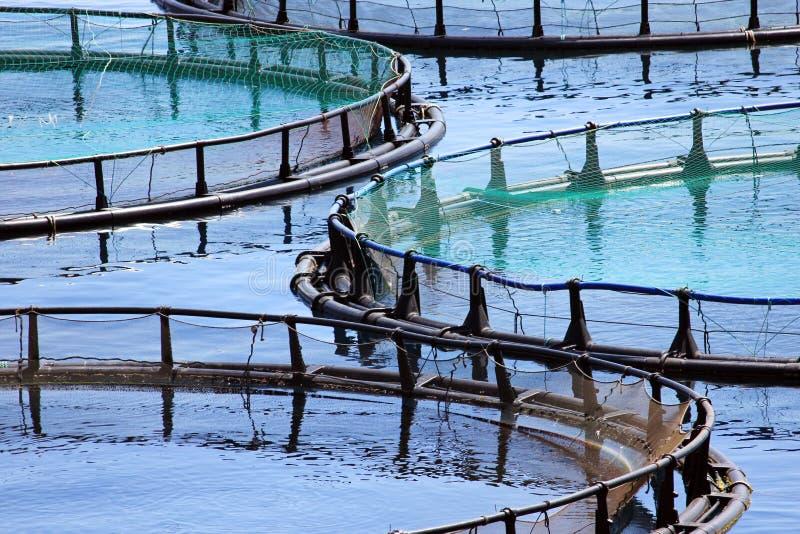 农厂鱼 免版税库存照片