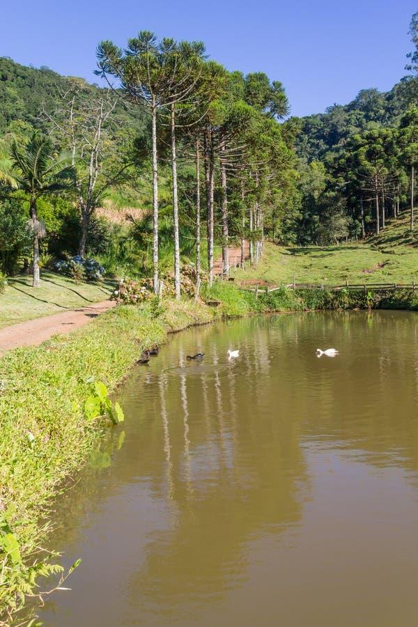 农场、湖、路和森林 库存照片