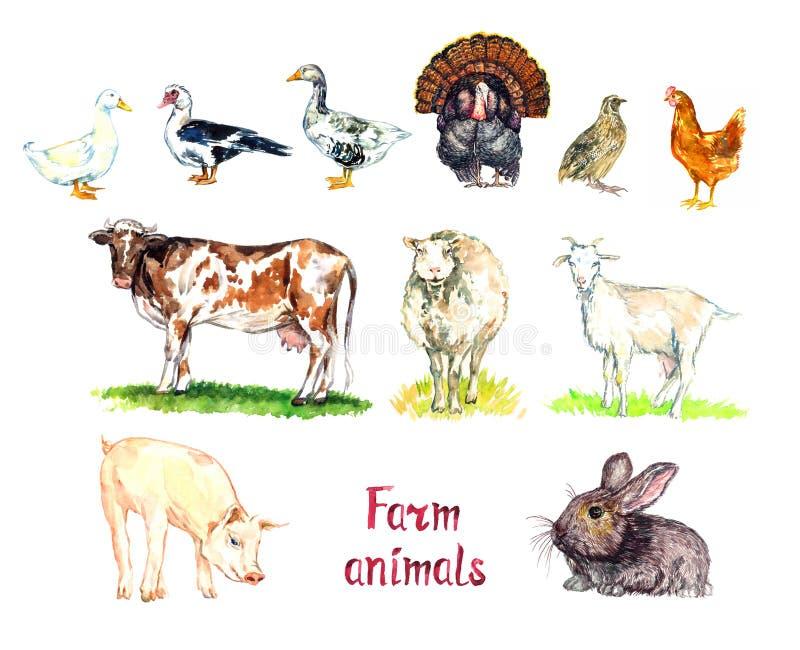 农场动物收藏,白家畜和南美肉鸭,鹅,火鸡,鹌鹑和鸡,红牛,白羊 皇族释放例证