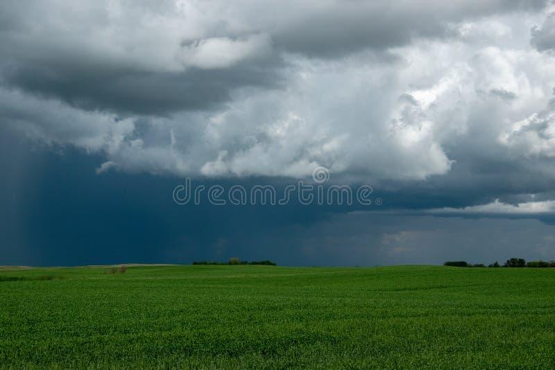 农场土地和油菜庄稼,萨斯喀彻温省,加拿大 免版税库存照片