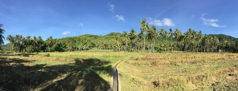从农场土地的全景 库存图片