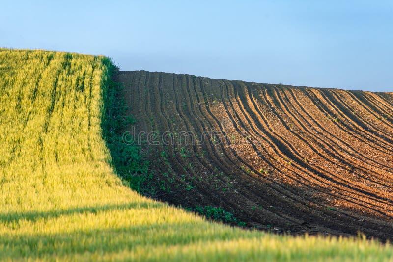 农场土地,绿色麦田 库存图片