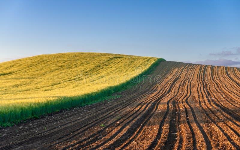 农场土地,绿色麦田 库存照片