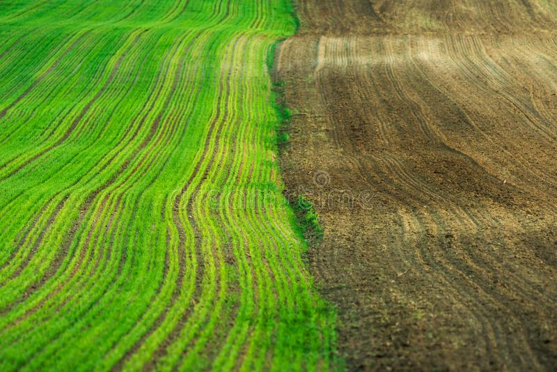 农场土地,绿色麦田 免版税图库摄影