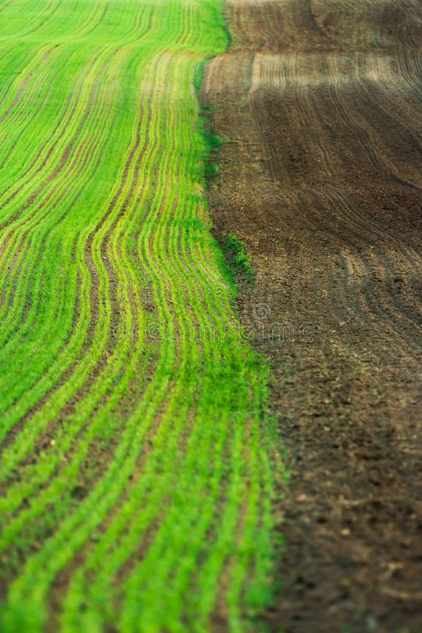 农场土地,绿色麦田 免版税库存照片