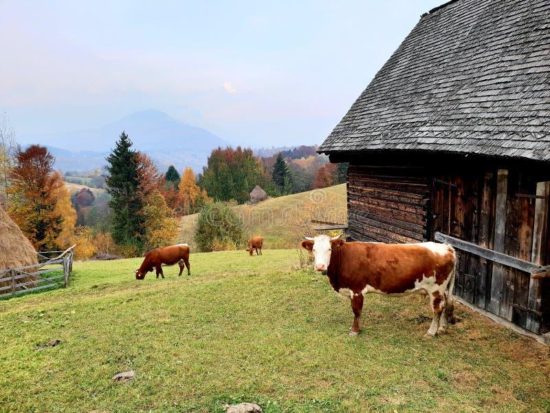 农场在Sohodol在布拉索夫县在罗马尼亚 免版税库存图片