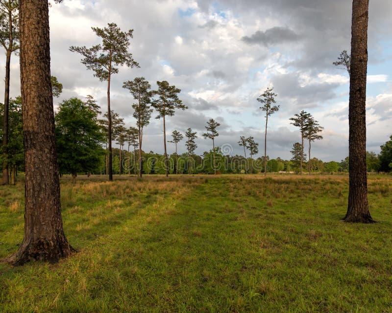 农场的牧场地 免版税图库摄影