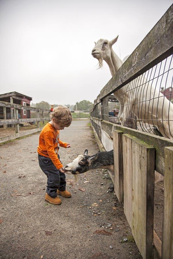 农场的男孩 库存照片