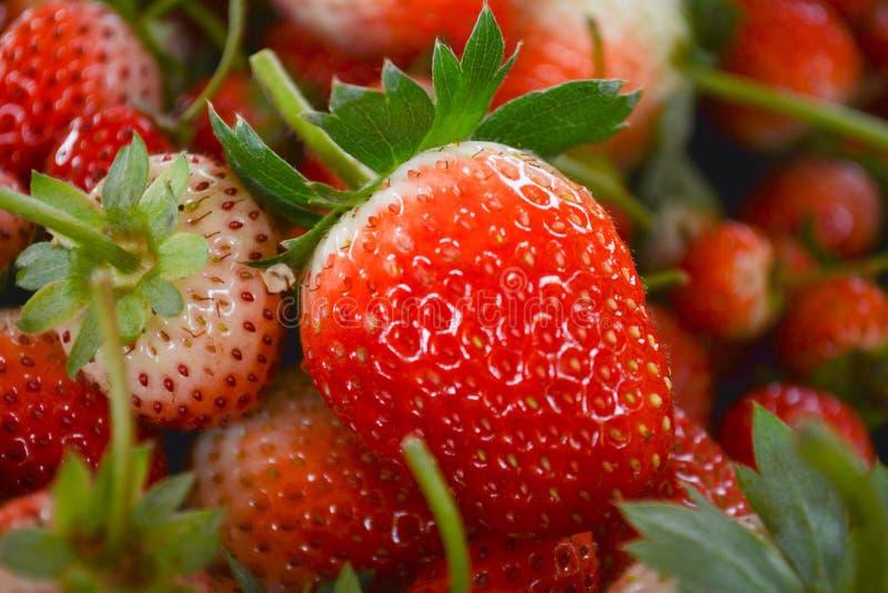 从农场的草莓芳香 免版税库存照片