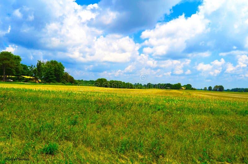 农场 图库摄影