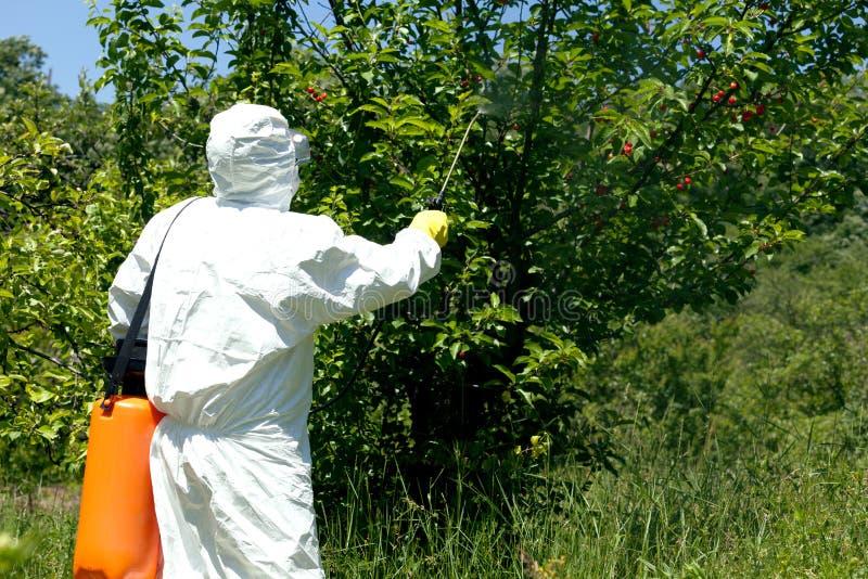 农夫喷洒的杀虫剂或除草药在果树园 免版税库存照片