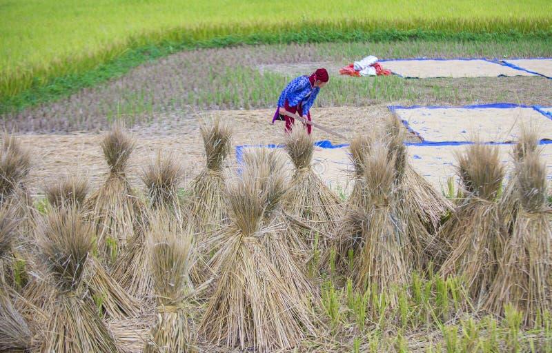 农夫在农村越南 免版税库存图片