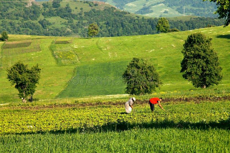 农夫在工作,与犁一起使用在领域 免版税库存图片