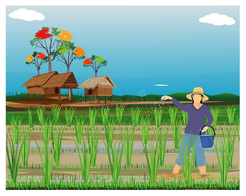 农夫在稻田的母猪肥料 库存例证