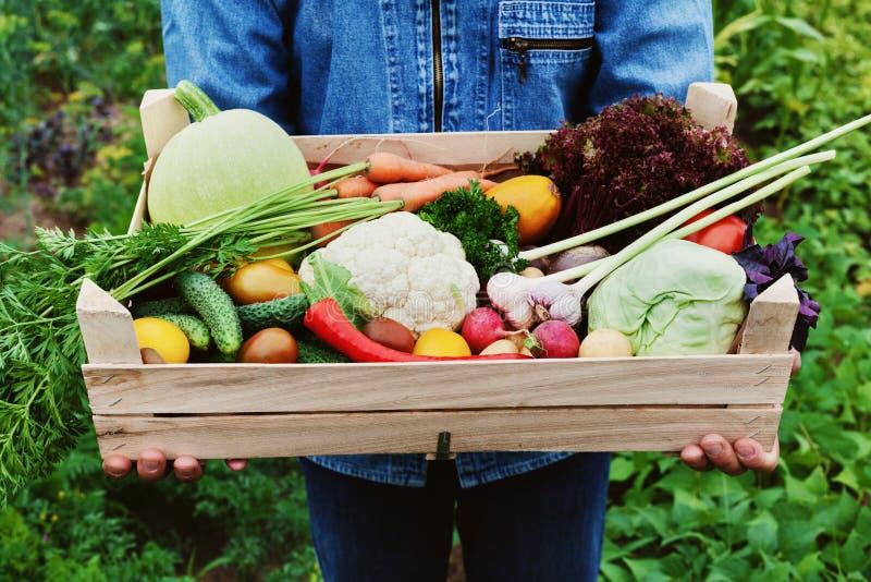 农夫在他的手上拿着有有机根菜和收获庄稼的一个木箱在庭院的背景的 免版税图库摄影