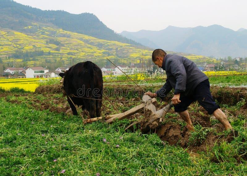 农夫域耕他们 图库摄影