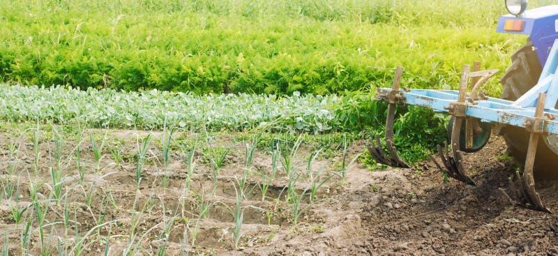 农夫培养韭葱菜行  ?? 杂草保护 季节性农活回来感觉 农业庄稼 种田, 库存图片