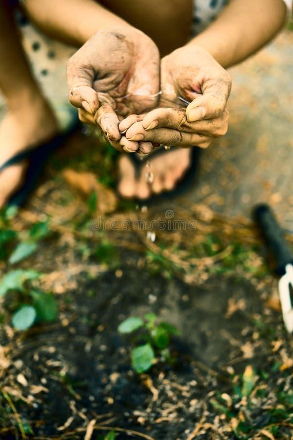 农夫增长的树 库存图片