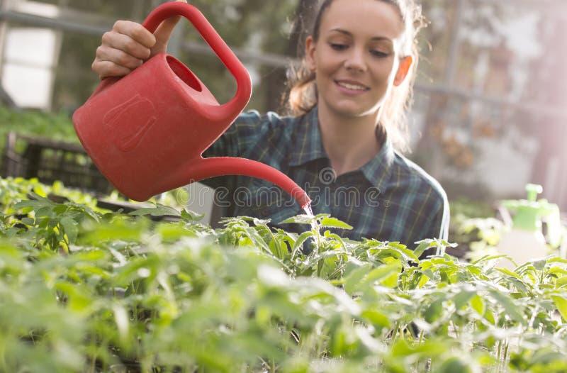 农夫女孩浇灌的幼木自温室 库存照片