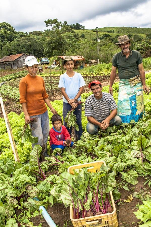 农夫家庭在甜菜种植园 免版税图库摄影