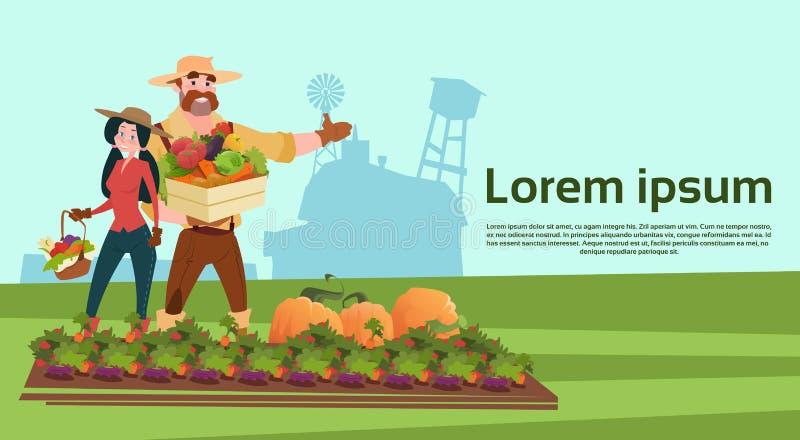 农夫家庭生长菜农田乡下风景 向量例证
