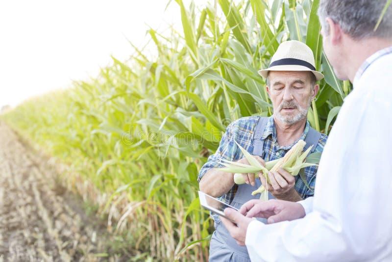 农夫对科学家的陈列棒子有在农场的数字片剂的 免版税库存照片