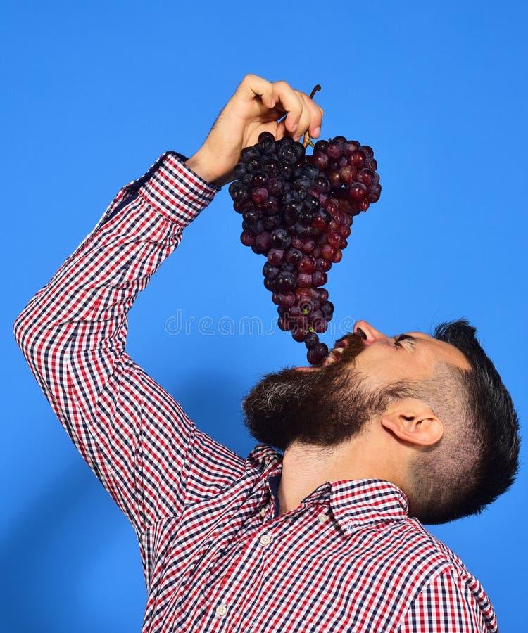 农夫展示有胡子的收获人放葡萄入嘴 库存图片