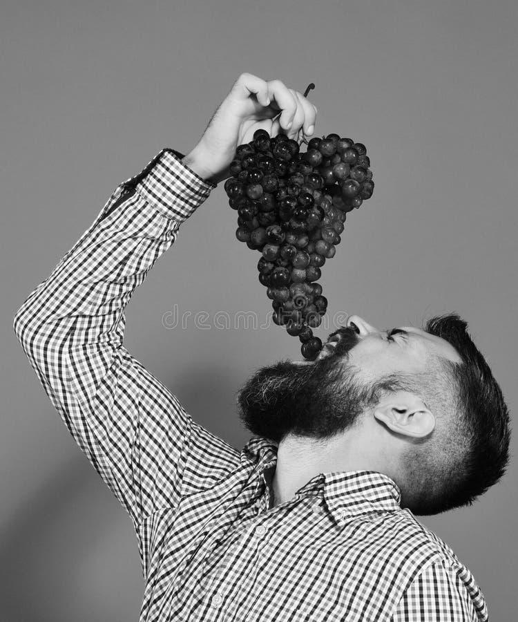 农夫展示有胡子的收获人放葡萄入嘴 免版税图库摄影