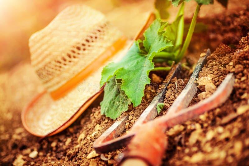 农夫工具在庭院里 图库摄影