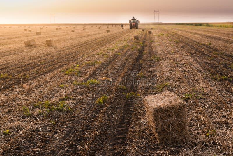 农夫投掷在牵引车拖车的干草捆-大包麦子 免版税图库摄影