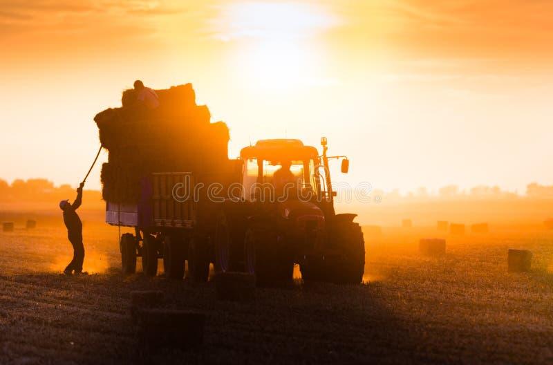 农夫投掷在牵引车拖车的干草捆 免版税库存图片