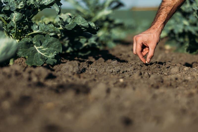 农夫播种种子 免版税图库摄影