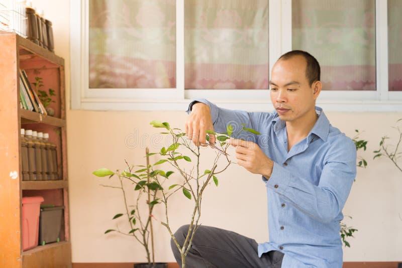 农夫是分析植物 库存图片