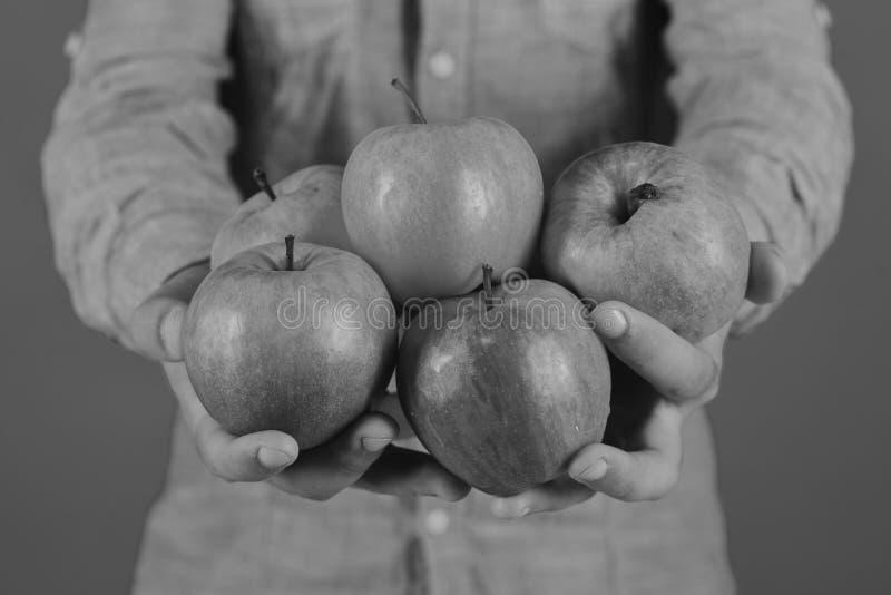农夫棕榈充满新鲜的苹果 男性手在绿色背景拿着红色苹果果子被隔绝 免版税图库摄影