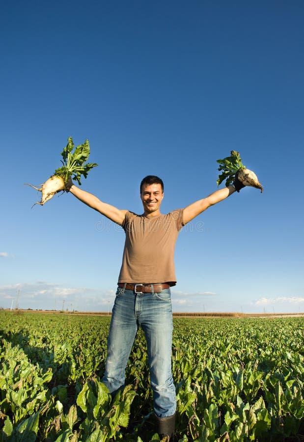 农夫用甜菜 库存照片