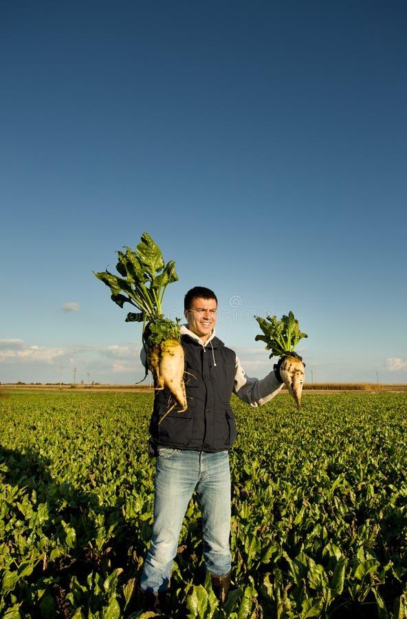 农夫用甜菜 免版税库存图片