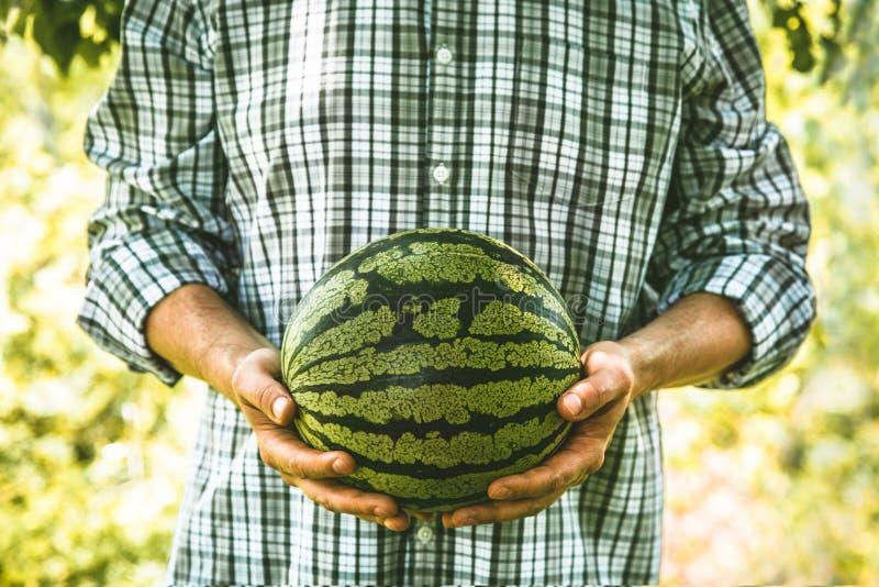 农夫用西瓜 库存照片