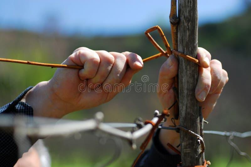 农夫的现有量 免版税库存图片