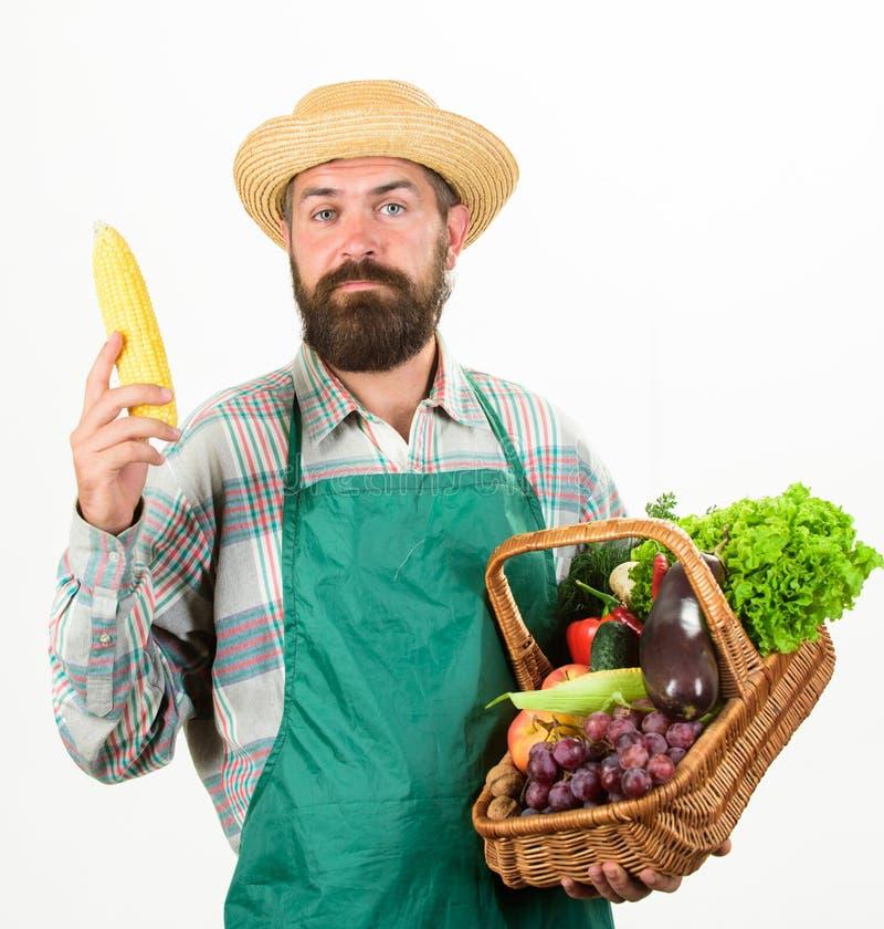 农夫草帽举行棒子和篮子菜 新鲜的有机菜柳条筐 行家花匠穿戴围裙 库存照片