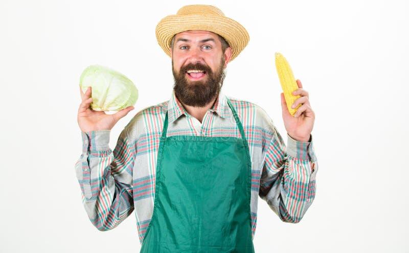 农夫草帽举行棒子圆白菜菜 新鲜的有机菜收获行家花匠在围裙举行 库存照片