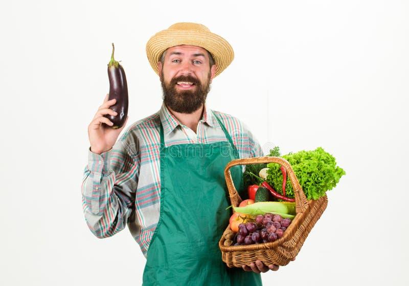 农夫草帽举行茄子和篮子菜 新鲜的有机菜柳条筐 行家花匠穿戴 免版税库存图片