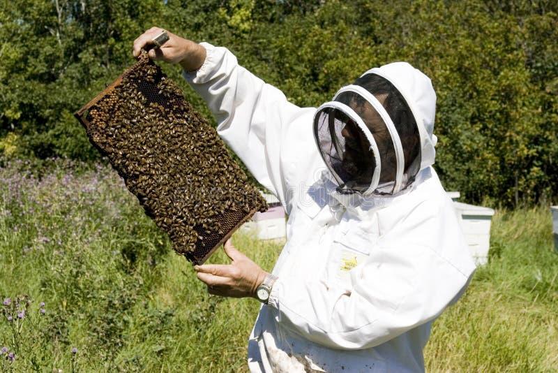 农夫蜂蜜 免版税库存照片
