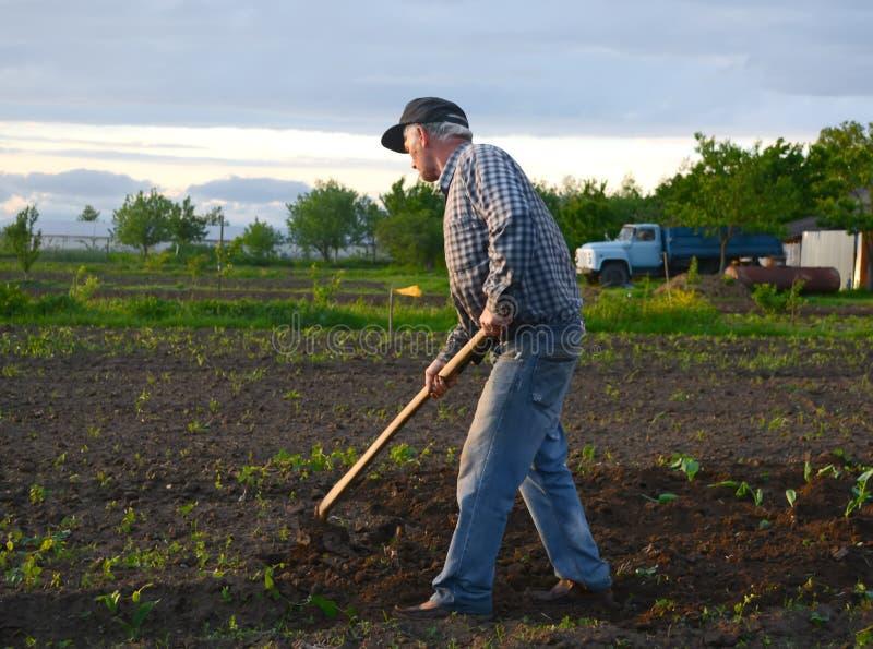 农夫锄的菜园 库存照片