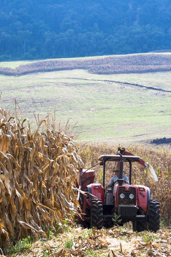 农夫驾驶在玉米收获的拖拉机 库存照片