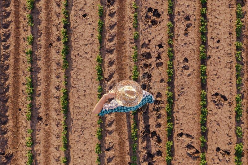 农夫鸟瞰图大豆领域的 库存图片